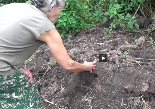 Hermione permaculture compost