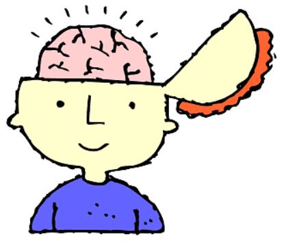 neurosciences, cerveau et apprentissage